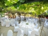 Olive Groves Wedding Gallery