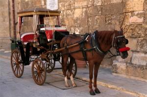 Weddings in Malta Horse & Carriage