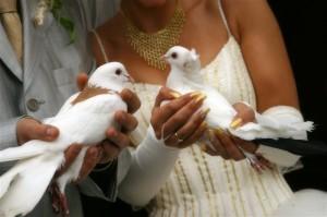 Wedding doves for your Malta Wedding